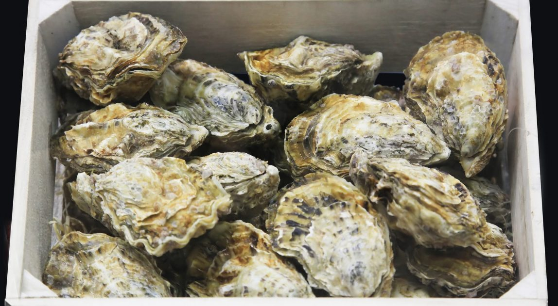 Oysters in a box